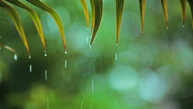 Música Relajante con Sonido de Lluvia ~ Música de Piano para Dormir, Meditar y Relajarse ☼25