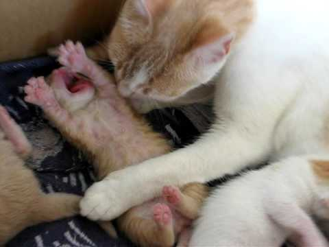 Mamma gatta e i suoi piccoli .....dopo una settimana