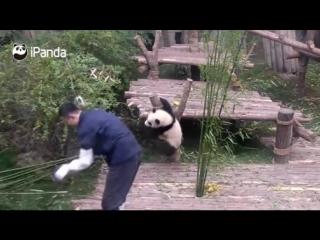 У панды на тебя есть свои планы