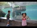 Смешная Подборка Приколов из Зоопарка 2018 Fails Дети vs Животные