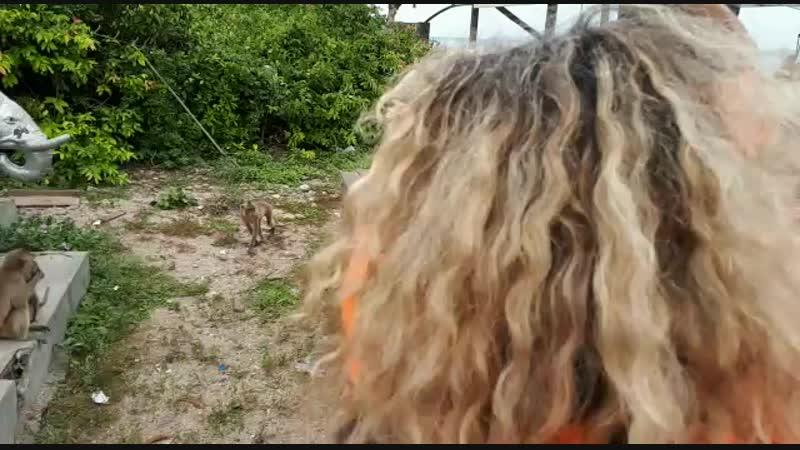 Тайланд остров обезьян