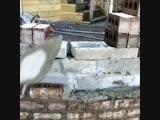 Отличная работа - кладка кирпича - Строим дом своими руками