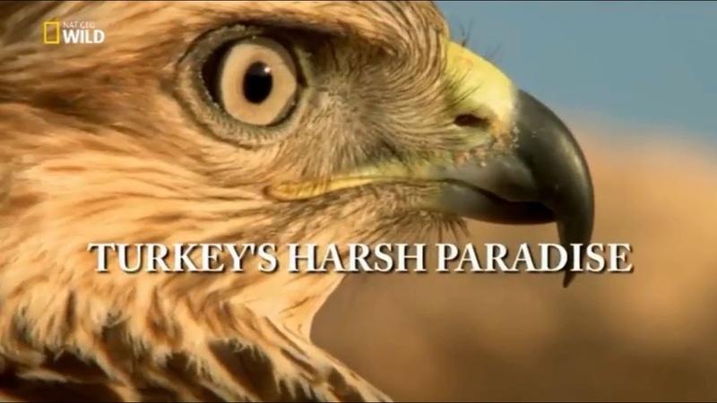 Türkiyenin Vahşi Doğası Belgesel