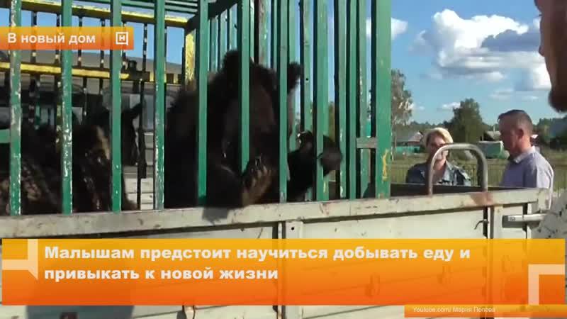Медвежата из зоопарка переехали жить в лес