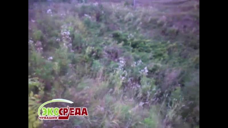 Рядом с деревней Пархикасы Чебоксарского района нечистоты сливаются прямо в озеро