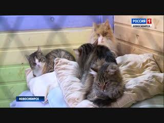 В приюте для животных замерзают кошки и собаки: волонтеры просят новосибирцев о помощи
