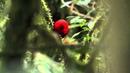 Birds of Ecuador [HD]