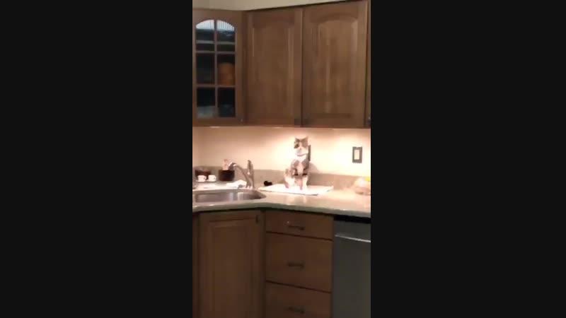Kitchen counter cat says wassup