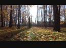 MAH00362 ЗОЛОТАЯ ОСЕНЬ ВИТЕБСК 2018 ПАРК В Л К С М.