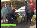 Человек собаке друг. Выставка животных из приютов Оленегорска, Североморска и Мурманска