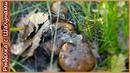 За грибами в октябре. Осенний сбор грибов в лесу