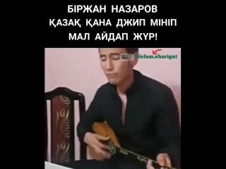 Қазақ қана джип мініп мал айдап жүр!