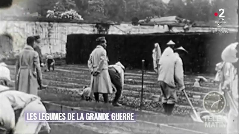 Jardin – Les légumes de la Grande Guerre