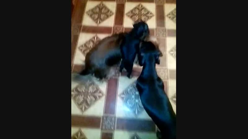 собачий малыш знакомится с миром