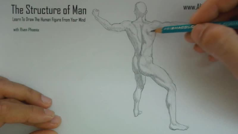 The Structure Of Man HD - 3 - Figure Sketching Basics HD_04