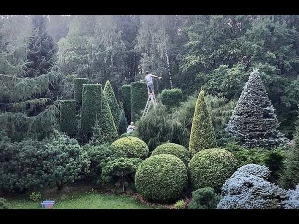 Хвойные растения. Что где посадить? Можжевельник Блю Стар, Холгер, Мейери, Блю Карпет, Флореант.