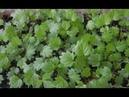 Семена ВЗОЙДУТ В 5 РАЗ БЫСТРЕЕ КОЛГОТКИ для ПОЛИВА