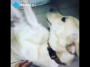 Как семья в Улан-Удэ потеряла и нашла любимую собаку