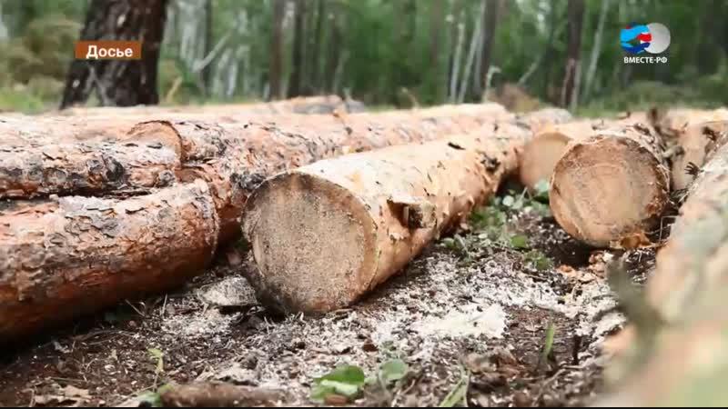Сенаторы хотят ввести уголовную ответственность для «черных лесорубов»