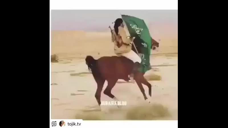 Download_Instagram_shamil001_42232017_196345117813871_3936721020118892544_n.mp4