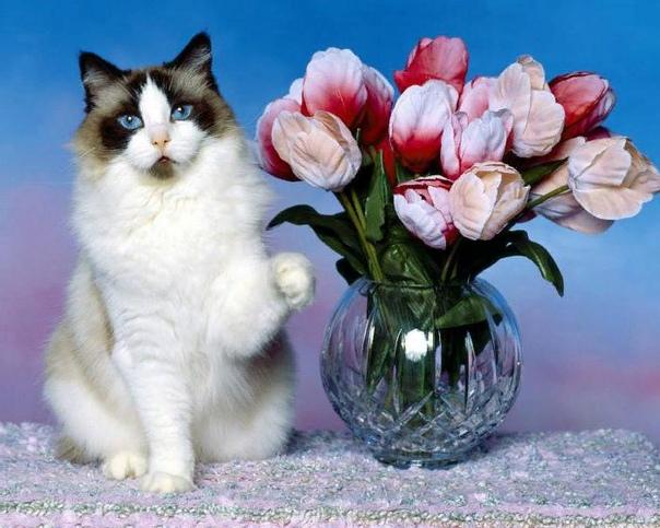 Чужая кошка пришла в дом: примета и толкование