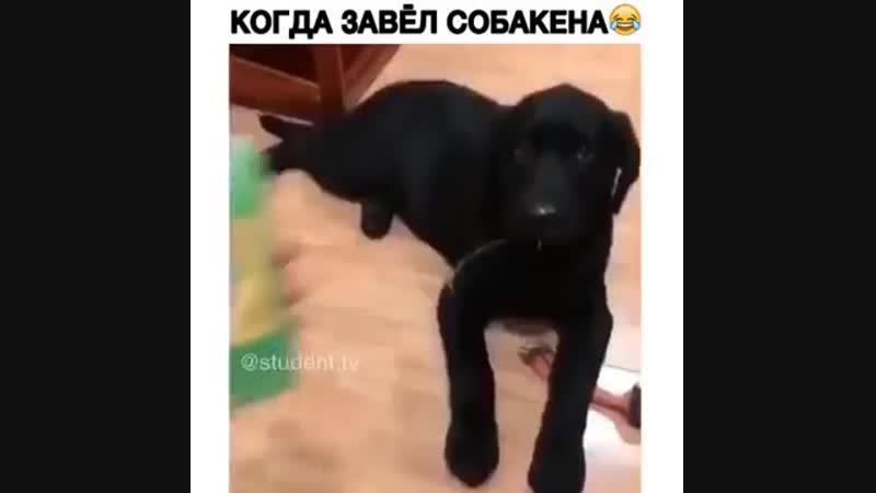 Завели собаку