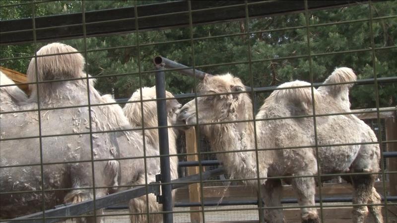 Уникальное для Зауралья событие произошло в одном из курганских зоопарков