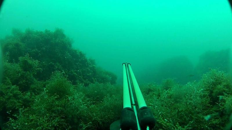 Подводная охота. Сингили 26.07.2012