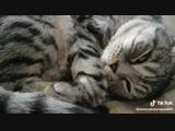 говорящий котик