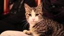 Kedi dostu imam dünya kamuoyunun takdirini topladı