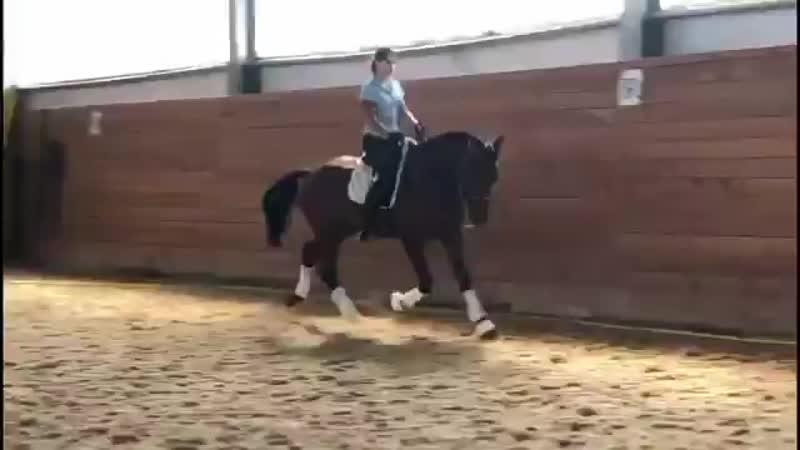 Horse for sale (Ганноверский жеребец)