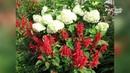 Садовые композиции Подбираем цветочные пары Сайт Садовый мир