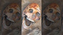 Farmer Unearths Elite Nomad Burials and 'Laughing Man' Elongated Skull