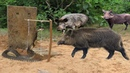 The First Creative Wild Pig Trap With Big wood Deep Hole - Amazing Pigs Wild Trap That Work 100%