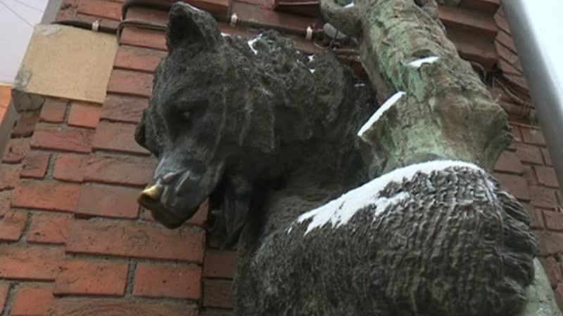 Где в Петербурге можно увидеть медведей