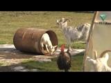Дачные истории: в гостях у семьи Мухиных