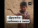 Мальчик приручает ядовитых кобр