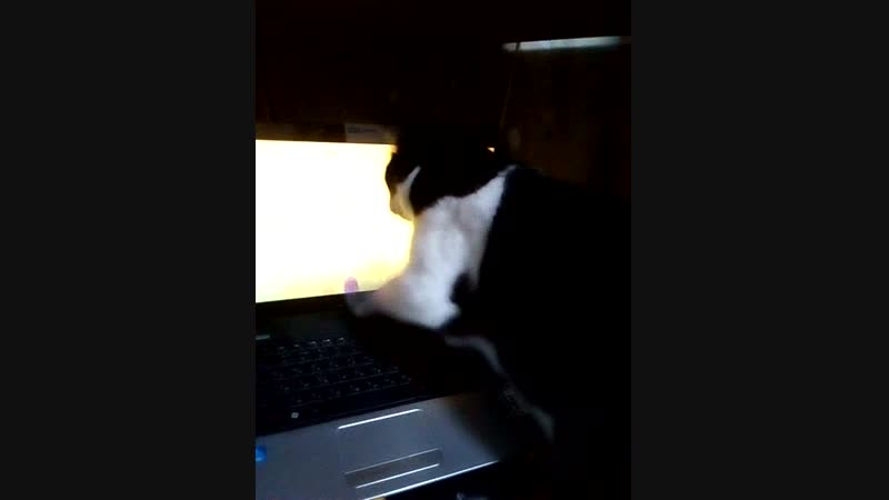 Установил для Барсика видео игру Мышь бегает и пищит по экрану! Через 17 секунд эту затею пришлось отменить иначе от экрана н