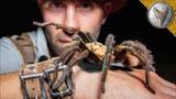 WILL IT BITE Holding Huge Spider!
