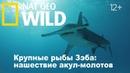 Nat Geo Wild Крупные рыбы Зэба нашествие акул-молотов / Zebs Big Fish