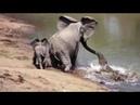 Животные спасают друг друга
