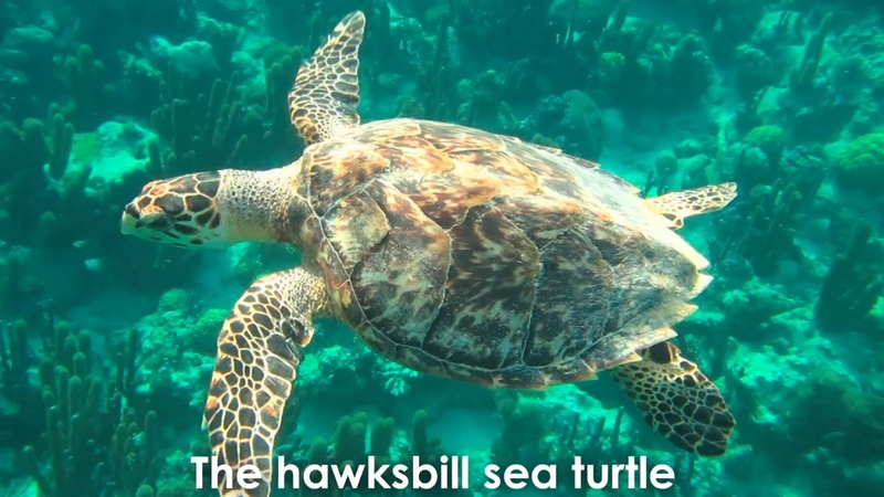Sea Turtles Are Too Rare To Wear