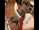 Приколы с котами – СМЕШНАЯ ОЗВУЧКА ЖИВОТНЫХ - Засмеялся проиграл – ТЕСТ НА ПСИХИКУ от DOMI SHOW