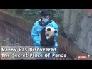 Nanny Has Discovered The Secret Place Of Panda iPanda
