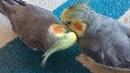 More Random Birdie Cuteness