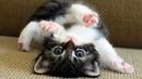 Котики и милые котята) Самое милое видео для детей