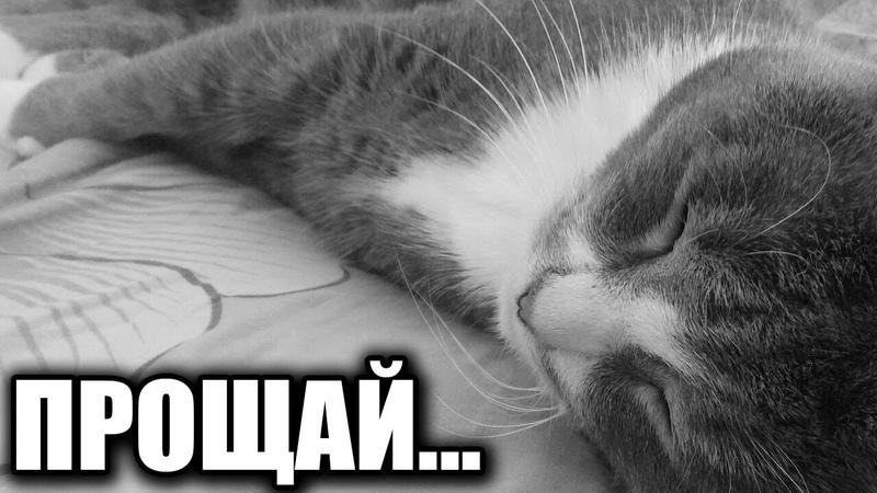 Грустная история как у меня умер мой любимый кот у меня на руках...