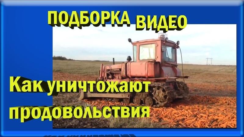 подборка видео. уничтожение продовольствия в РФ варварским способом