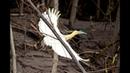 5 самых необычных в мире птиц!