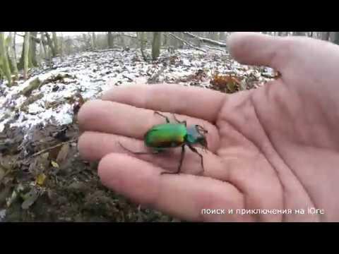 Весёлый коп Червяки жуки осколки мины монета